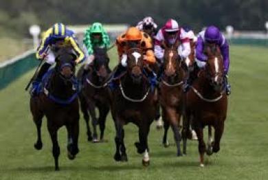 horse racing buzz